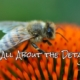 Bee, Details